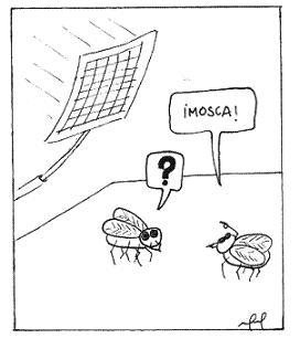 Curiosidades sobre moscas